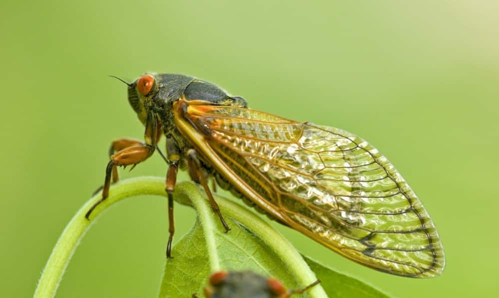 The Cicadas Are Coming – Is Your Car Ready?