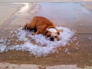 Preventing Heat Exhaustion