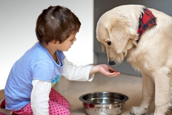 little girl offers dog food from her hand