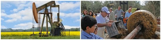 complicated canola oil production versus simple olive oil extraction puts olive oil in the family of good fats